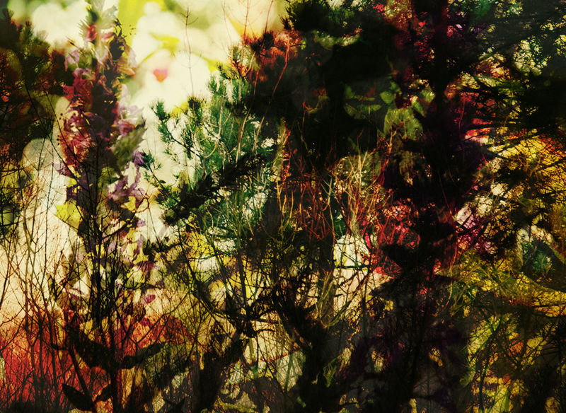 Abstract Botany Double Exposure Flower Green Leaf Nature Plant Springtime Tree