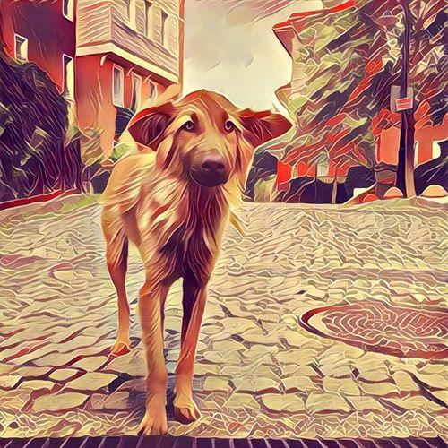 Dog Digital Manipulation