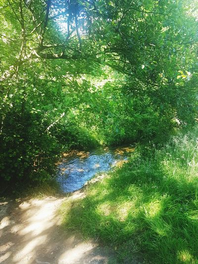 So much nature today.. lovely sunday at Dalby Forest. Water Day Sunlight Green Color Outdoors No People Grass Reflection Growth Backgrounds Tree Beauty In Nature Nature Illuminated EyeEmNewHere Tranquility Forest Forestwalk