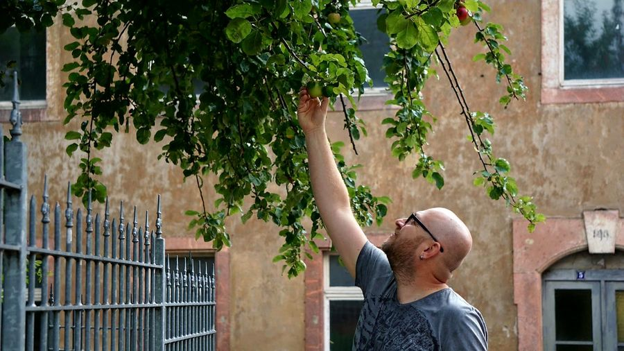 Man wearing eyeglasses while picking fruit from tree