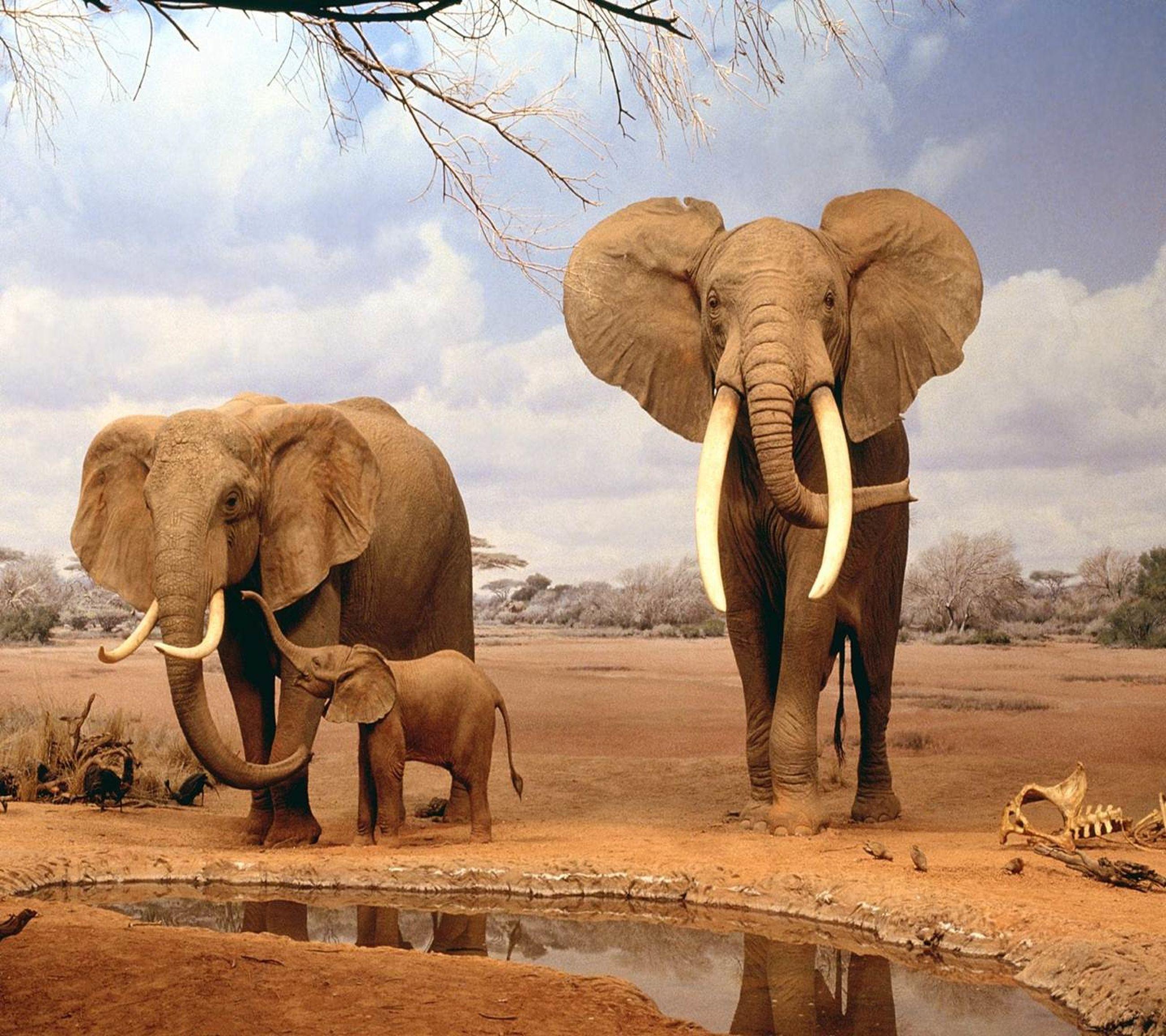 animal themes, elephant, mammal, vertebrate, two animals, herbivorous, horse, domestic animals, zoology, togetherness, animal, elephant calf, full length, young animal, sky, trunk, animal trunk, care, safari animals, outdoors, day, field, working animals, livestock, cloud - sky, non-urban scene