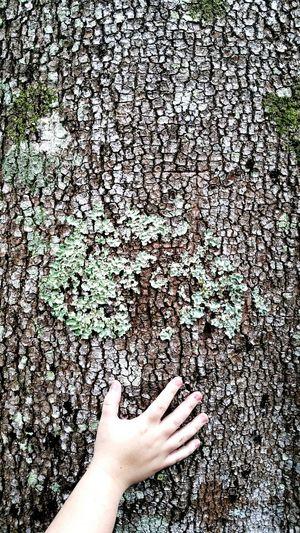 Trees Rainforest Life