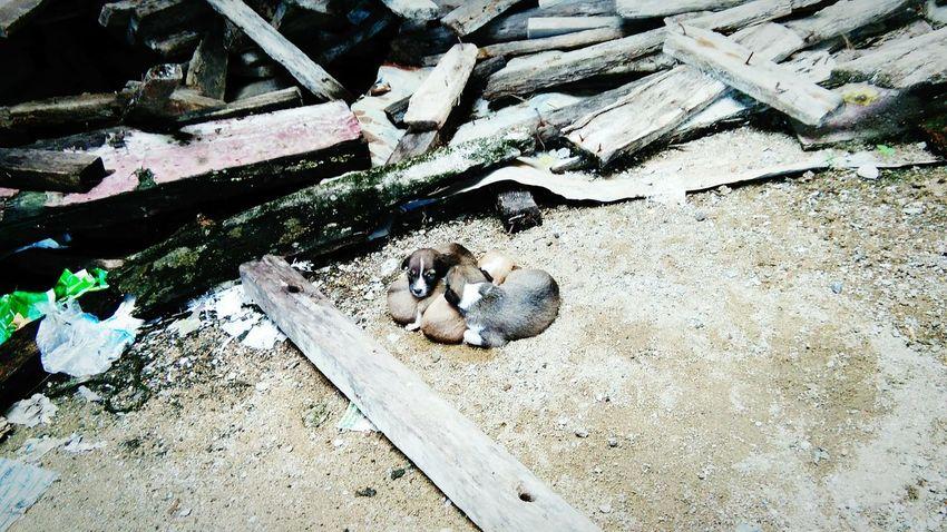 建設中の校舎で見つけた子犬達。