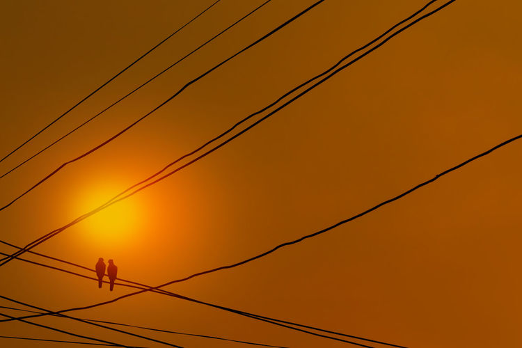 Silhouette a pair of birds perched on electricity power lines and facing talk with clear sky.
