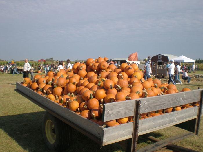 Pumpkins For Sale At Farmers Market