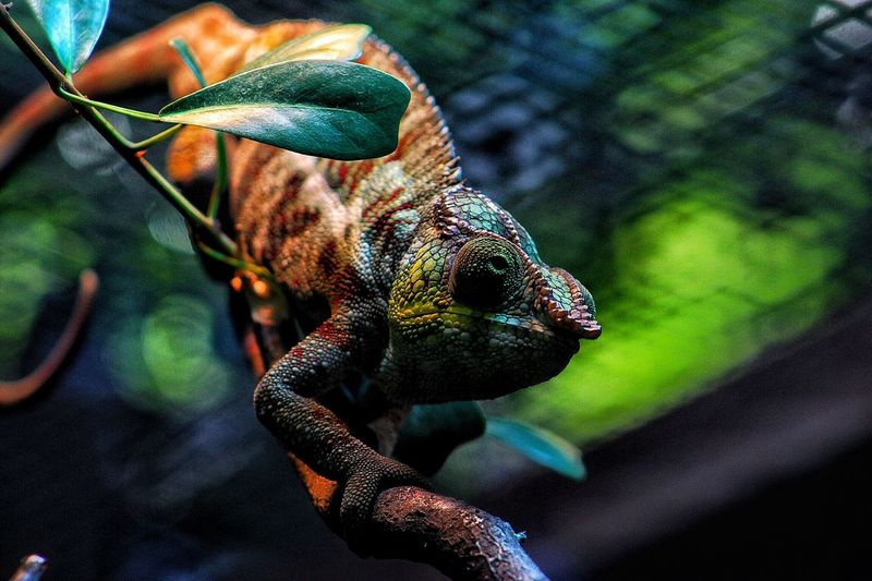 Mister color EyeEm Selects Animal Themes Animal One Animal Vertebrate Animal Wildlife Animals In The Wild Reptile Close-up No People