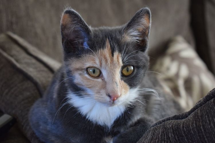 Check This Out Hanging Out Hi! Relaxing Cats Cat Kitten Ginger Animal