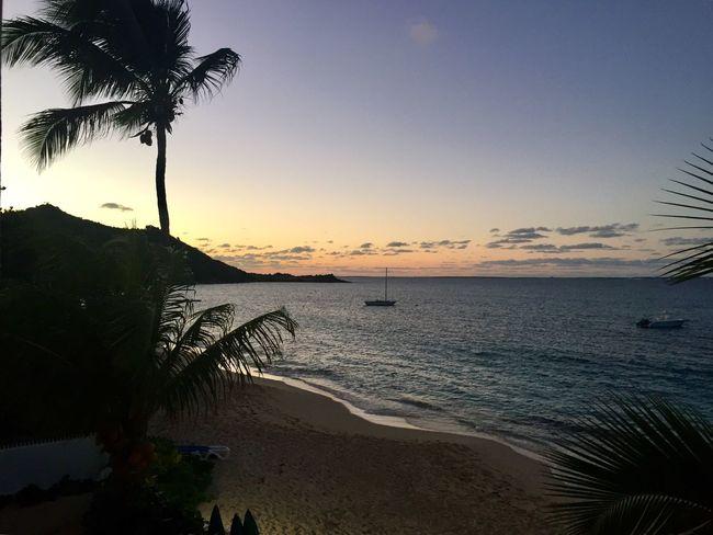 Sunset Beach Palm Tree Nature Sunset_collection Sunset Silhouettes Caribbean Caribbean Sea