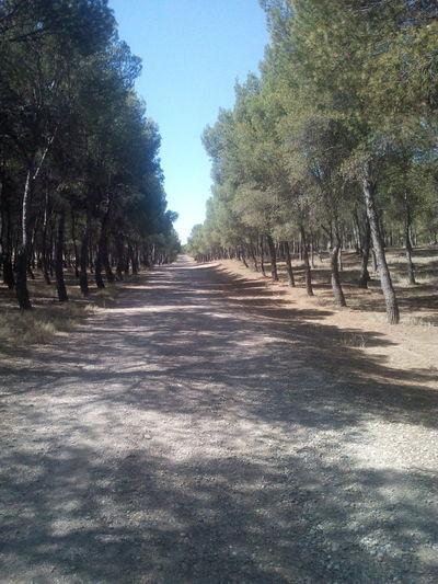 Zaragoza SPAIN Forest Infinity ∞ Road Life