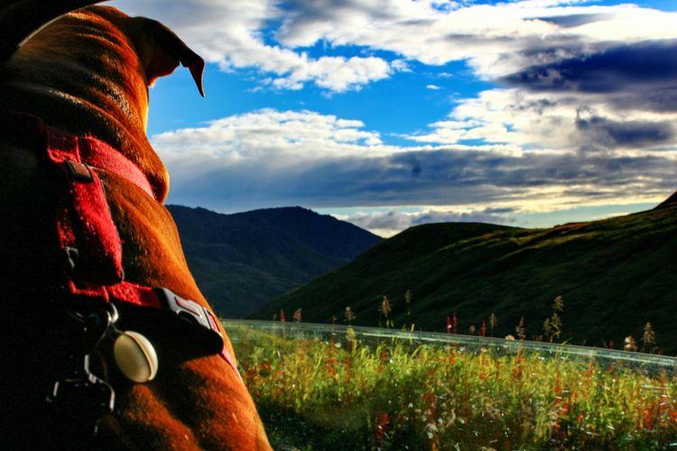 Waiting for adventure by Kaos photography Kaos' Life Hikingadventures Alaska Life Kaosphotography Pitbulllife