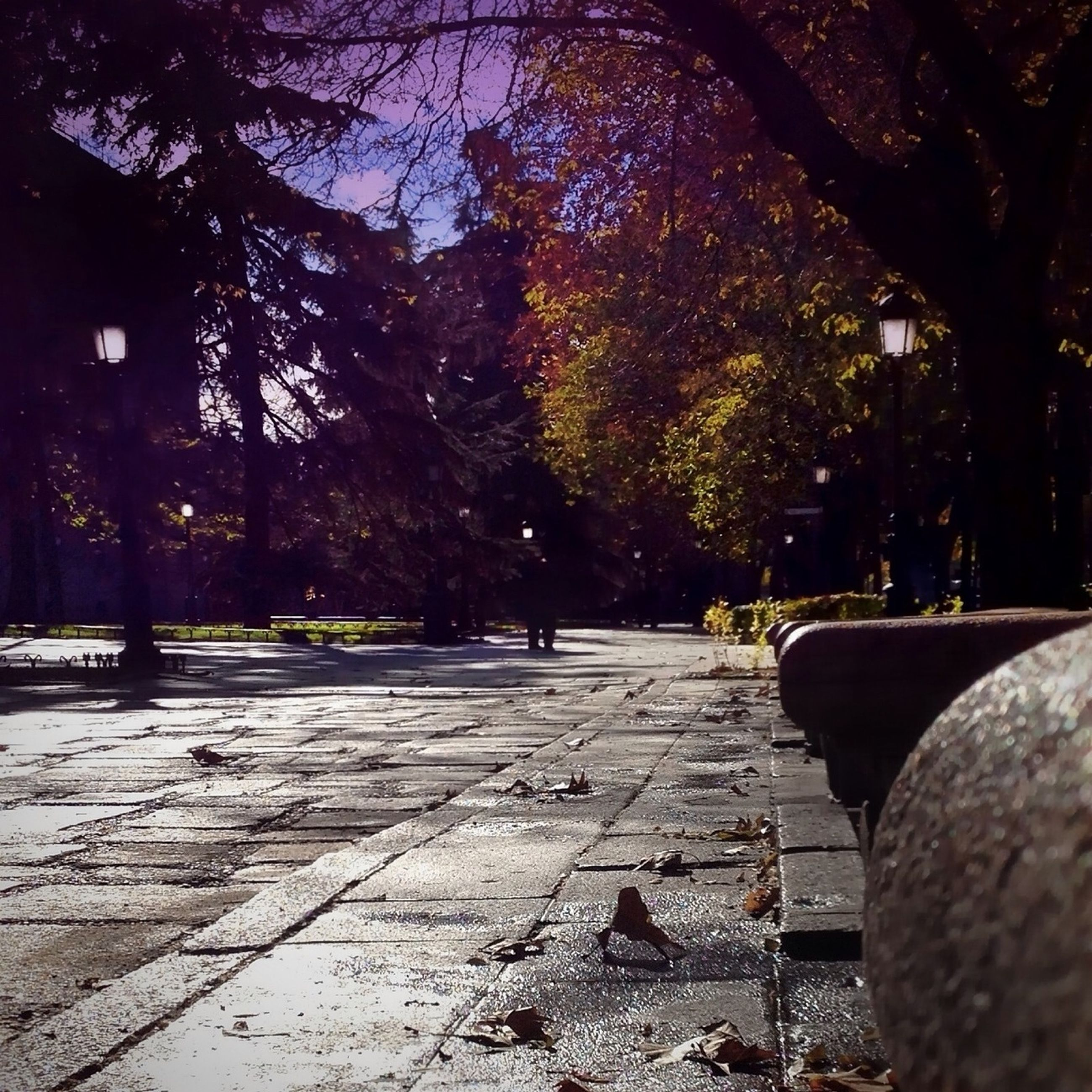 tree, the way forward, footpath, street, transportation, tree trunk, diminishing perspective, road, cobblestone, outdoors, built structure, day, sunlight, vanishing point, empty, branch, nature, growth, sidewalk, park - man made space