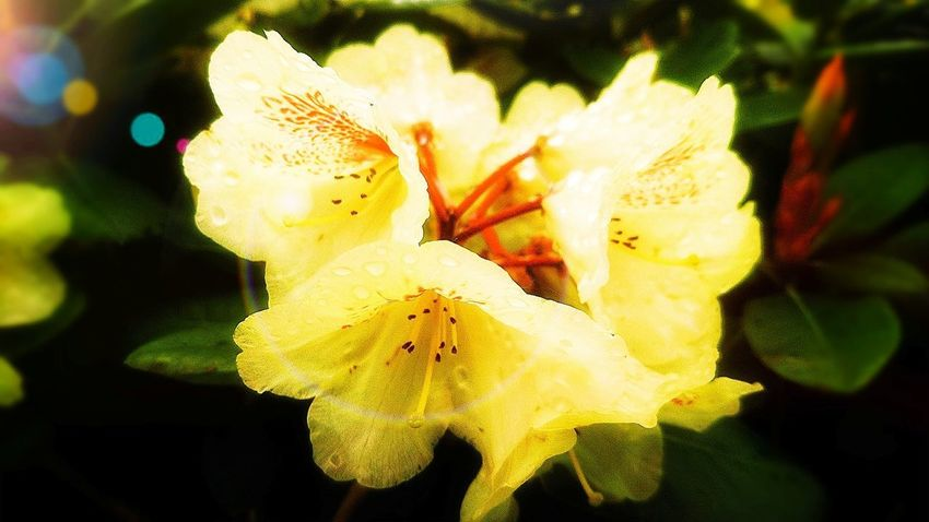 Flower Flower Head Fragility Petal Nature Beauty In Nature Plant Yellow Freshness Close-up No People Growth Outdoors Day