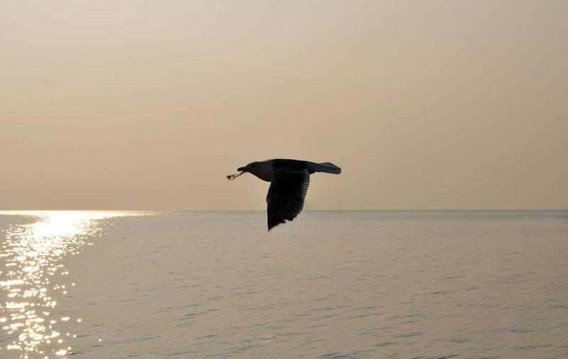 Bird flying over calm sea
