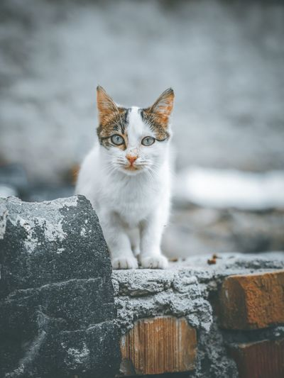 Portrait of cat standing outdoors