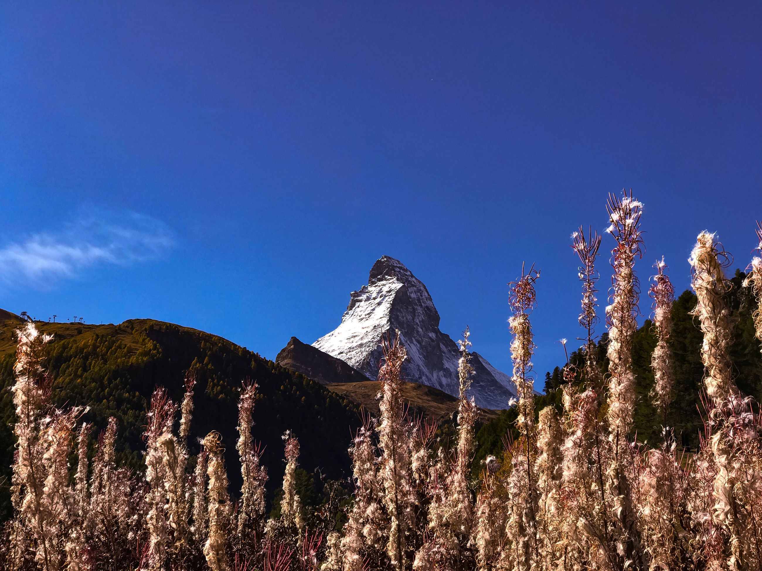 mountain, nature, beauty in nature, scenics, tree, no people, tranquility, tranquil scene, growth, day, plant, outdoors, clear sky, mountain range, blue, flower, snow, sky