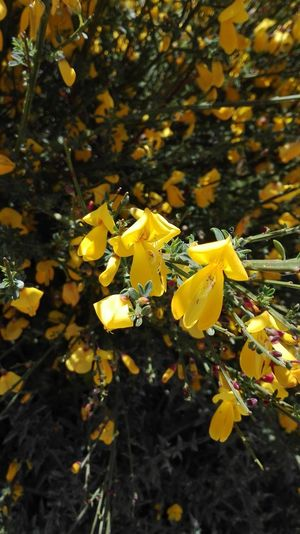 Fiore Giallo Fioriselvatici Fioritura Happiness Sunnyafternoon Sunny Days Nature Multi Colored Outdoors No People Close-up Day Freshness Fragility Autumn 100 Days Of Summer Summertime Afternoon Light Growth Plant Green Color Nature Flower Petal Blossom Flower Head Stamen