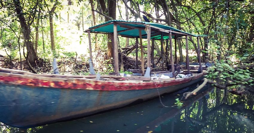 A shipwreck in the back water boat ride in the gods own country. Kerala India Travel Shipwreck Poovar Island Greenery