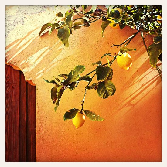 Mediterranean  Light And Shadow Great Atmosphere Lemon