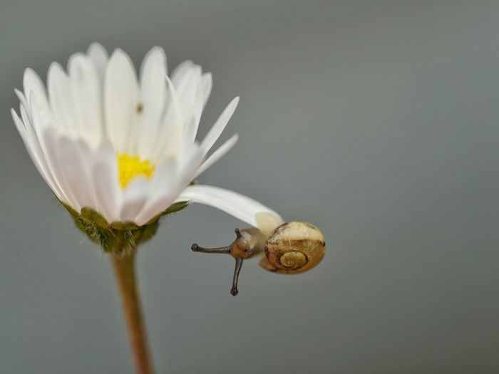 Close-up of snail hanging on flower petal
