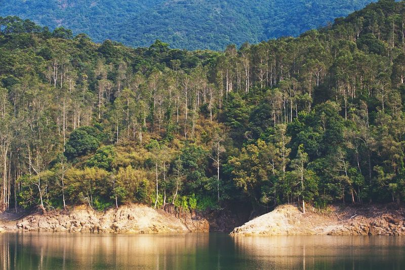 Landscape Enjoying Life Hong Kong Nature Trees Forest Nature Photography Nature_collection Green Relaxing Clear Sky Riverside River View Riverbank Water
