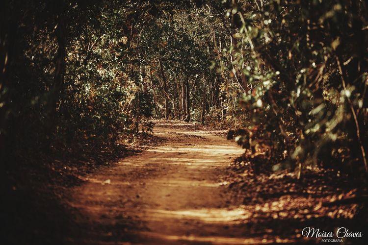 Caminho Tree Empty Road Tunnel Monsoon Country Road
