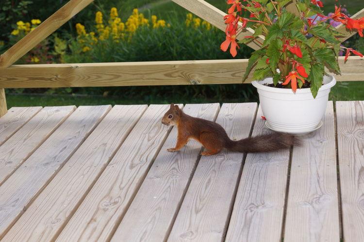 squirrel Animal Themes
