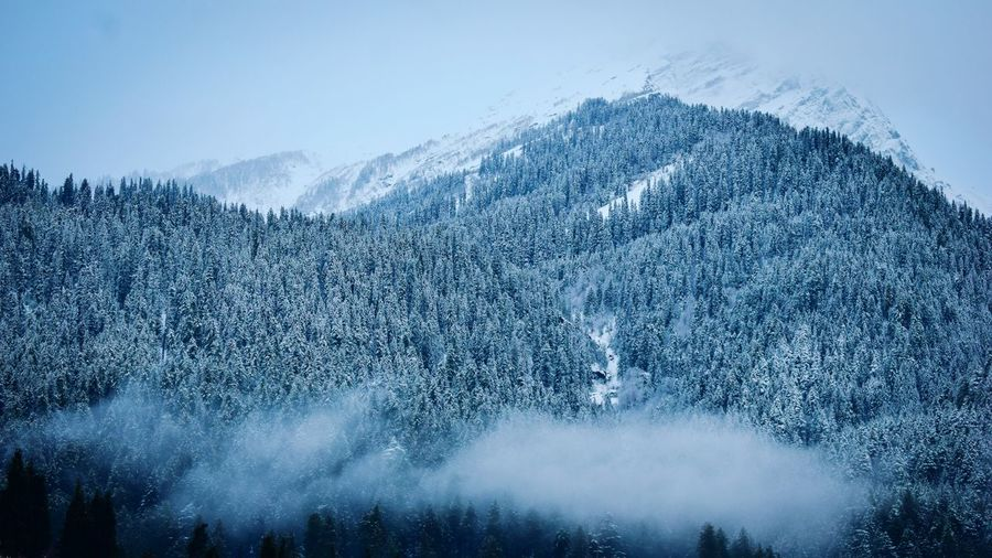 Aerial view of pine trees on snowcapped mountain against sky