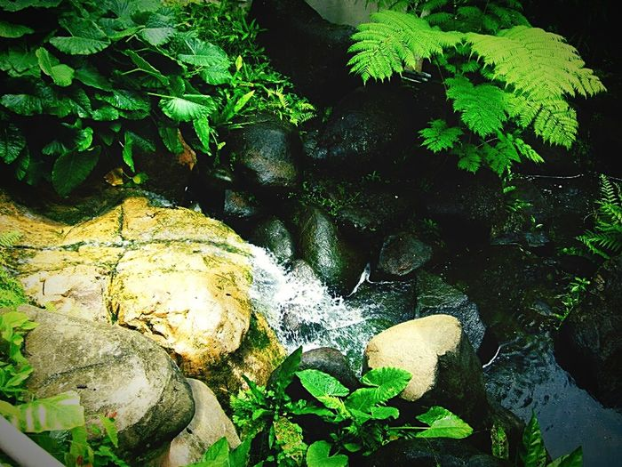 Green Green Green!  Flowing Water Tranquility Freshness Leaf Water Forest Environment Outdoors Taking Pictures Rainforest Phoneography Shadows & Lights Check This Out From My Point Of View No People Tropical Paradise Forest Photography Nature Natures Colors Silence Of Nature Tropical Climate Hidden Gem Natureporn Nature_collection