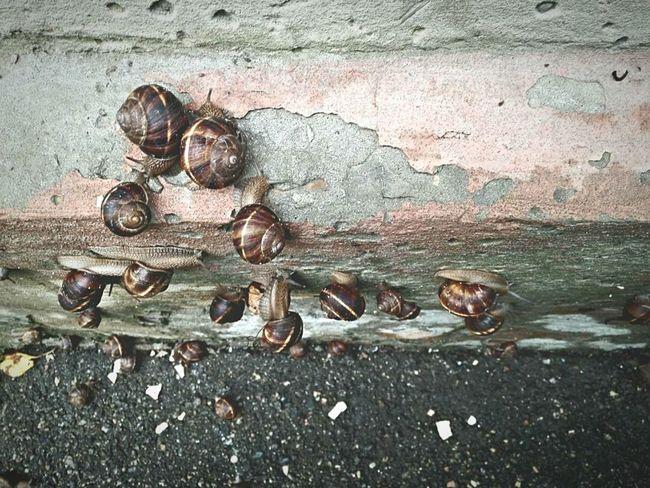 Snails Snails🐌 After The Rain