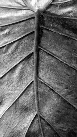 #fullframe #Blatt #blackandwhite Backgrounds Full Frame Pattern Close-up Textured  Nature No People Day Freshness