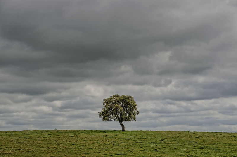 Single tree on field against storm clouds
