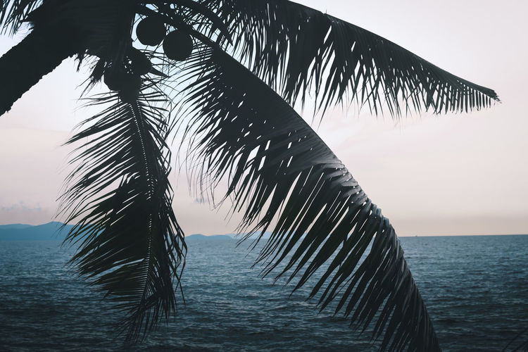 Coconut palm tree over dark blue of holiday and summer ocean background. Water Sky Sea Tranquility Nature Beauty In Nature Palm Tree Tranquil Scene Horizon Over Water Horizon Tree Scenics - Nature Beach No People Tropical Climate Outdoors Leaf Palm Leaf Coconut Palm Tree Coconut Leaves Sihouette  Dark Blue Ocean Summer Tropical