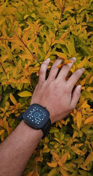 High angle view of person hand with yellow leaves