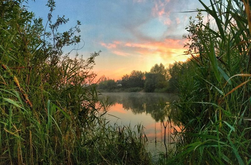 Sunset at the lake Dusk Dusk Colours Lake View Colorul Sunset_collection Showcase July Nature Nature Photography Panorama Grass Grassy Lake Lakeshore Summertime Russia Tuchkovo Landscape_Collection Foggy Evening Evening Sky Evening Light Water Reflections Countryside Outside Photography Outside Freedom