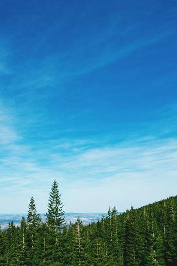 Trees on landscape against blue sky