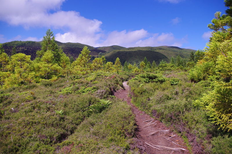 Azores Nordic Walking Path Beauty In Nature Forest Grass Landscape Mountain Nature No People Outdoors Scenics Sky Terceira Trail Tranquility Tree Walking