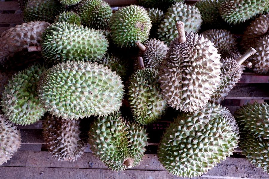 Durian Thai Fruits Thaifruit Thai Fruit Thai Durian Durian Season Durians Durian Fruit Durian Plant Growth Nature Cactus Succulent Plant No People Green Color Beauty In Nature Freshness