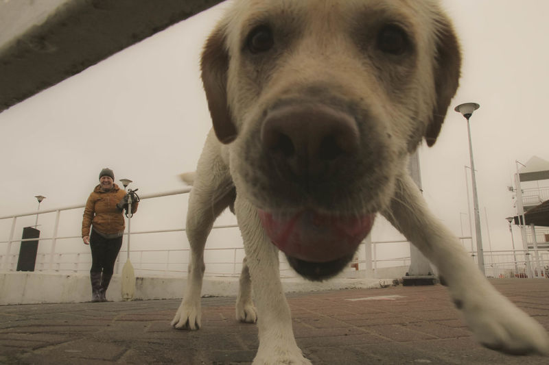Animal Themes Baltic Sea Beach Walking Day Dog Dog Walking Dog With A Ball Dog With Toy Domestic Animals Mammal One Animal