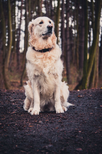 Dog sitting in a forest