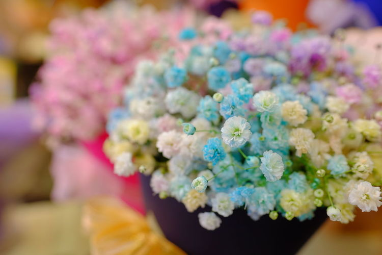 Close-up of flower bouquet