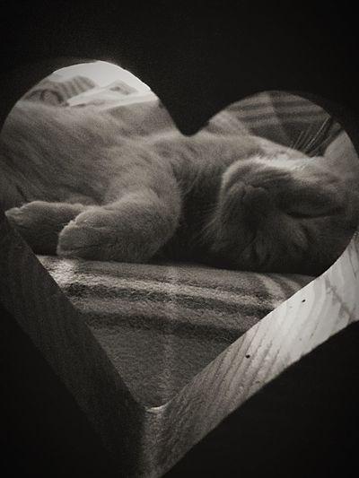 Smelly cat First Eyeem Photo Sleeping