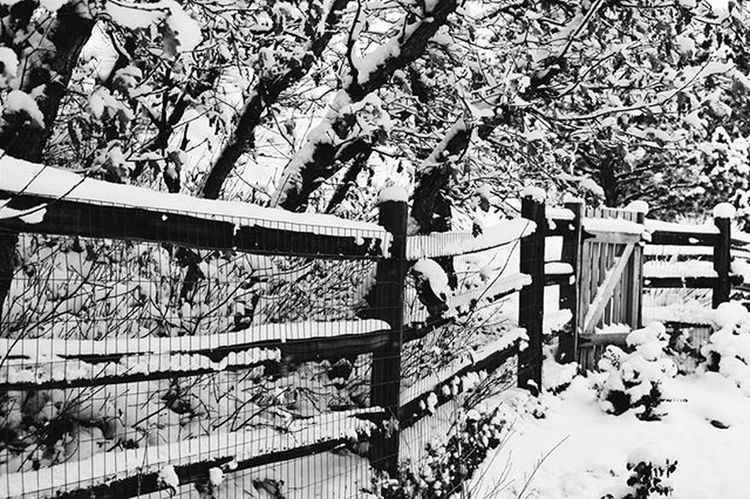 Snow Winter Colorado Coloradosprings Nature Blackandwhite Blackandwhitephotography Bnw Bnw_globe Bnw_rose Bnw_captures Bnw_life Bnw_planet Bnw_society Bnw_colorado Travel Vscophile VSCO Vscocam Filters Nikon D3300