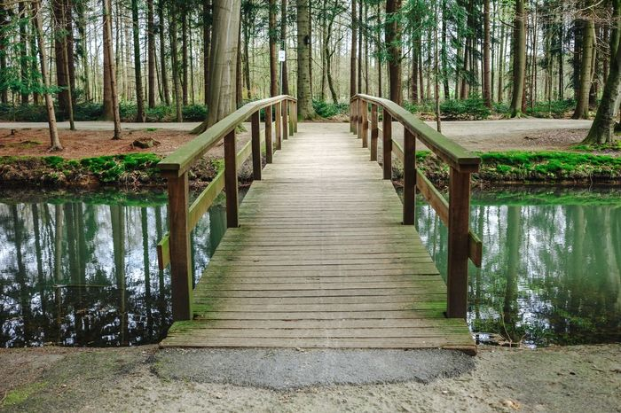 Green Tourism Eye4photography  Germany Tourist My Favorite Picture  Nature Traveling Trees Magical Plant Bridge Water Water Reflections Nature_collection Nature's Diversities Nature Photography The Great Outdoors - 2016 EyeEm Awards Eye4photography  Nature Walk