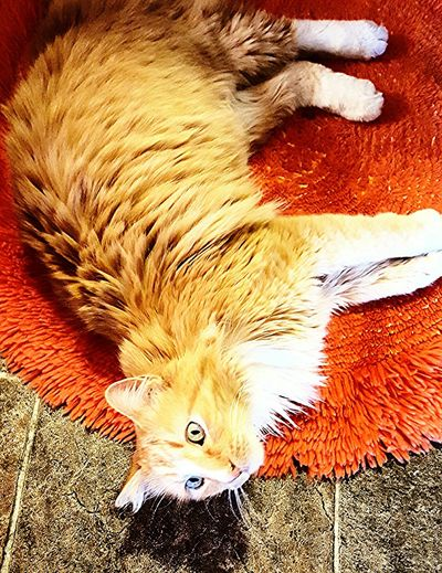 Sunshine Loves The Retro Orange Rug. Eyeem Cats Portrait Precious Moments Of Life Color Splash Pattern Pieces EyeEm Best Shots EyeEm Pets Catlovers Catslife