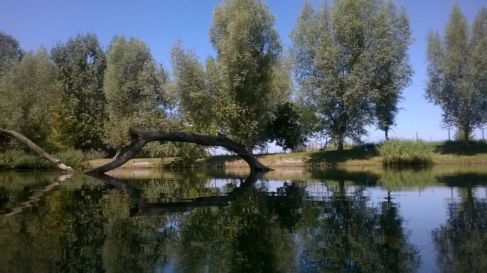 Beauty In Nature Lake Nature No People Reflection Tree Water