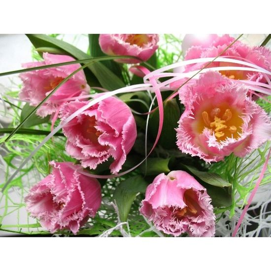 Люблю! всемцветов всемлюбви девочкитакиедевочки восьмоемарта сегодняпраздникудевчат сегоднябудуттанцы flower tulips vscocam vsco
