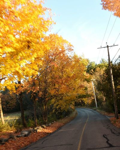 Country road Backwoods No Mans Land Booneys Boondogs Clean Aor Fall D7200