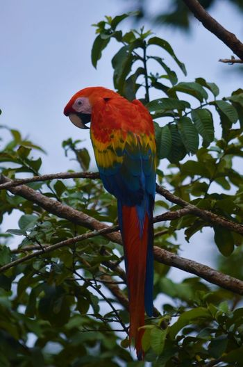 Amazonas Guacamayo Exotic Birds Exotic Bird Colors Colorful Red Parrot Nature Amazon River Colombia Colors Colors In Nature Guacamaya Guacamaya En Colombia Animal Bird