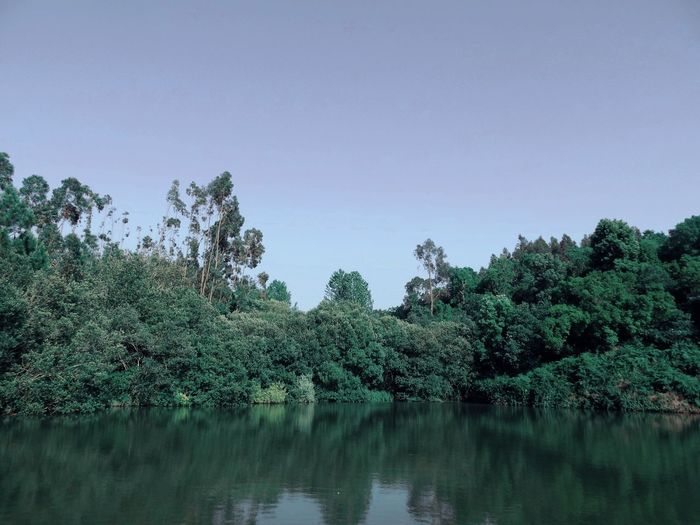 Lagoa Tree