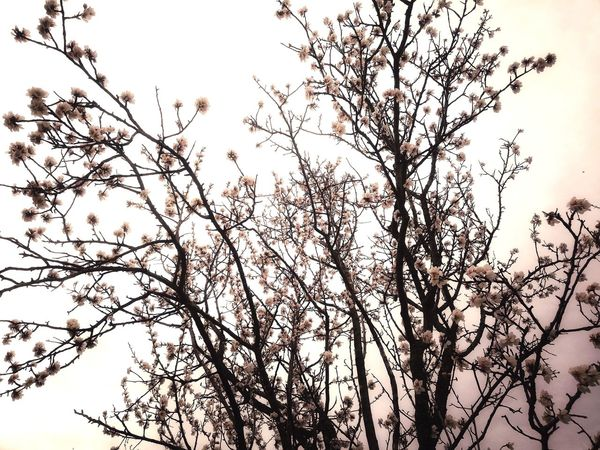 Nature Spring Springtime #naturephotography #naturelovers Spring Time Spring Has Arrived Spring Flowers Tree Branch Flower Backgrounds Flying Silhouette Sky Blooming Plant Life In Bloom Botany Blossom Flower Head Apple Blossom